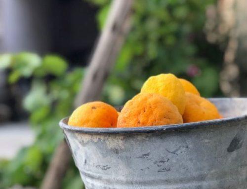 End Citrus Fruits Season